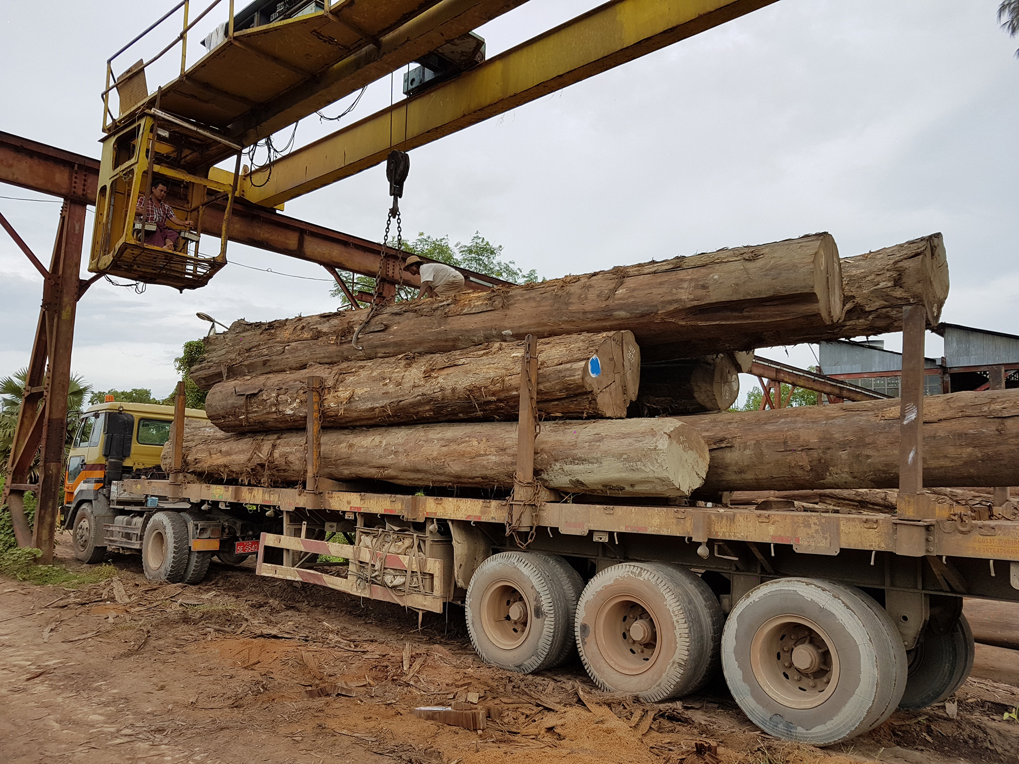 Adriatica timber at the service of importers